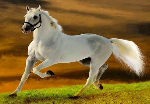 American Quarter horse, World's Most Expensive Horse Breeds 2016