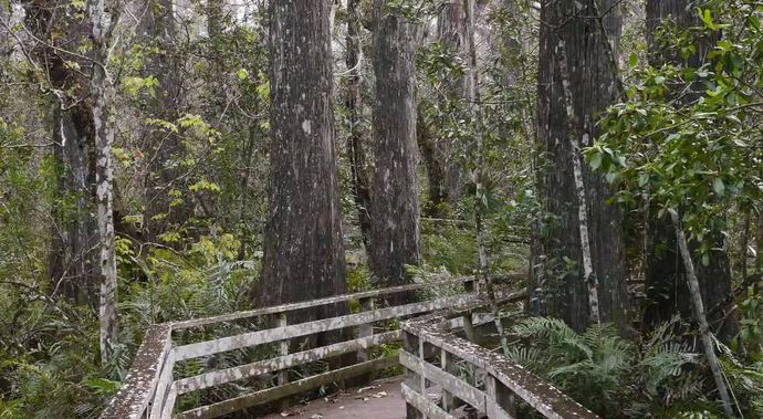 Corkscrew Swamp Sanctuary, Most Beautiful Places in Florida 2017