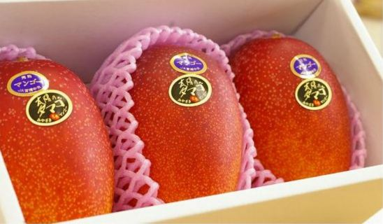 Taiyo no Tamago Mangoes, World's Most Expensive Fruits 2018