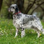 Top 10 Cheapest Dog Breeds In The World