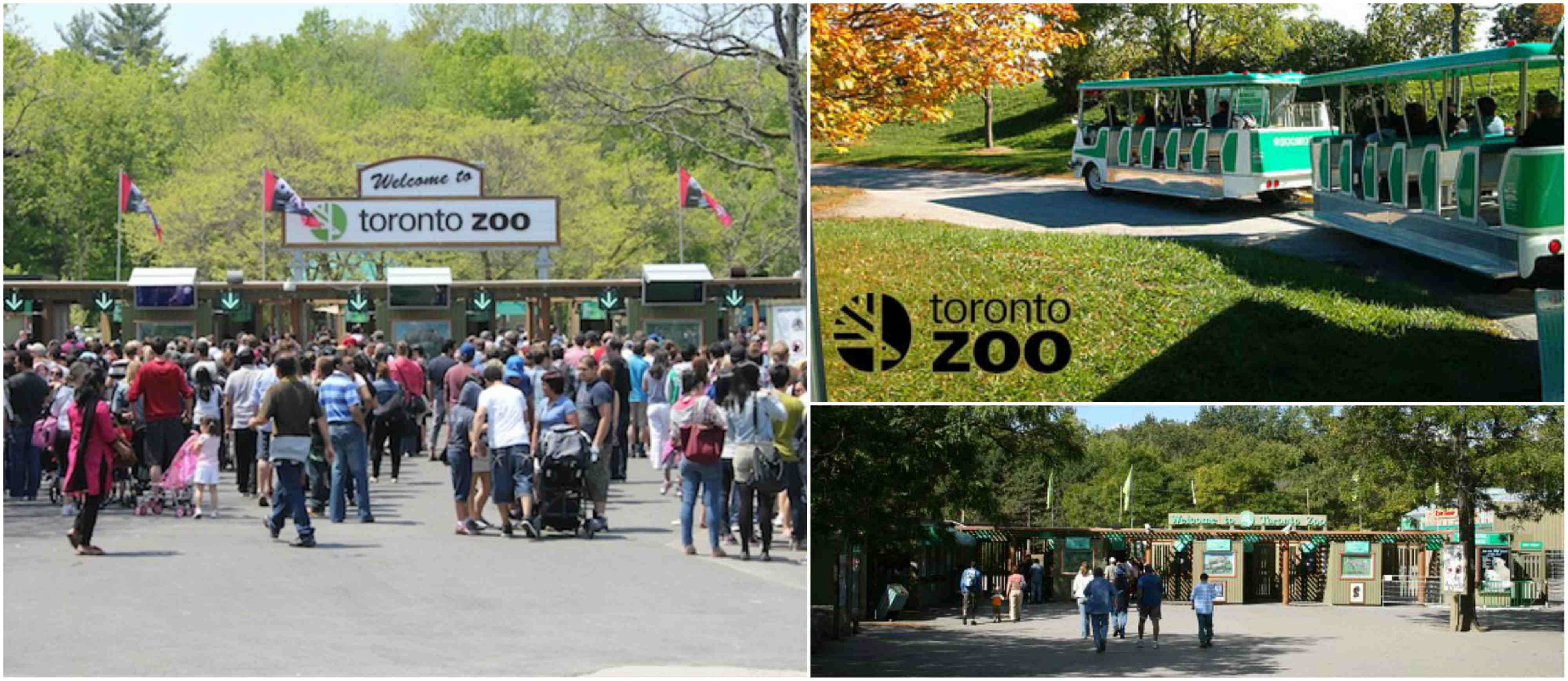 Coupons for calgary zoo 2019