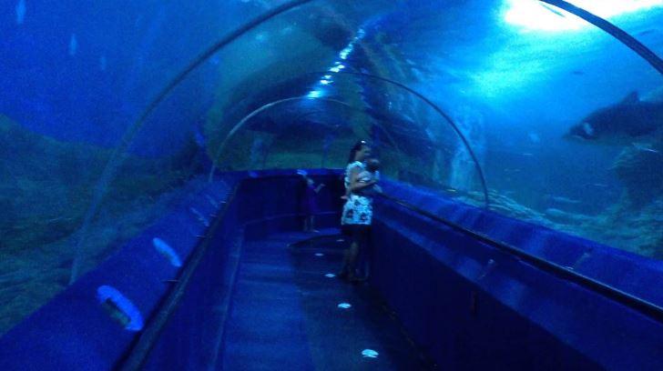 Aquarium Of Western Australia, Perth Top 10 Most Amazing Aquariums In The World 2017