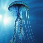 Top 10 Most Dangerous Sea Creatures