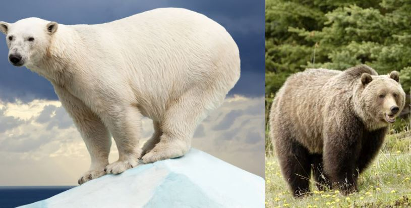 brown-and-polar-bears-top-famous-biggest-animals-in-the-world-2019
