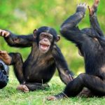 Top 10 Smartest Animals Breeds in The World