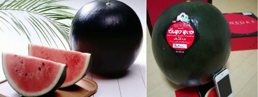 densuke-watermelon