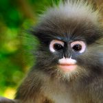 Top 10 Most Amazing Monkeys Breeds in The World