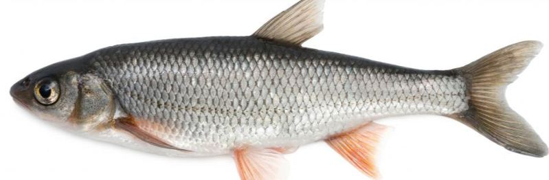 fish-top-10-foods-for-better-health
