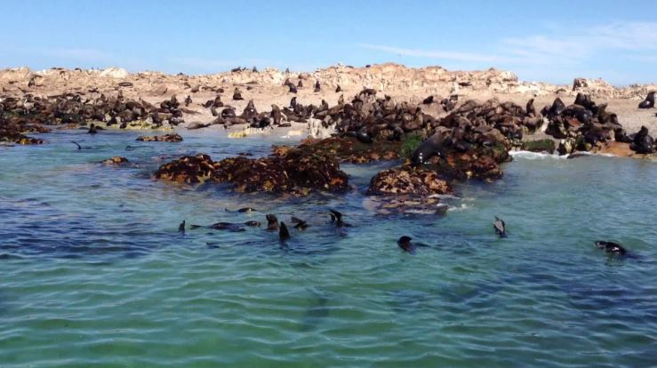 Gansbaai, South Africa Top Most Famous Dangerous Beaches in The World 2018