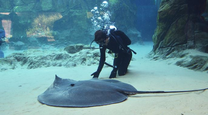 giant-freshwater-stingray-top-popular-largest-freshwater-fish-in-ahe-world-2019