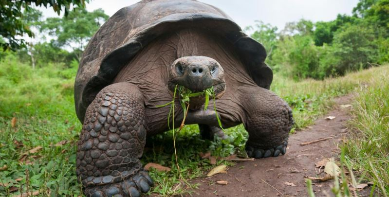 giant-tortoise-top-most-slowest-animals-in-the-world-2017
