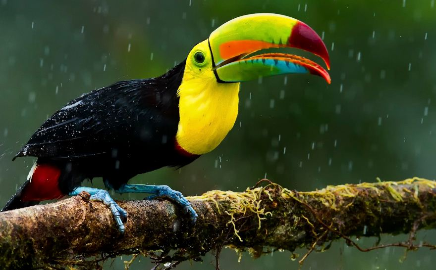 keel-billed-toucans-top-most-famous-beautiful-birds-in-the-world-2019