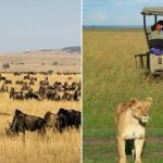 Top 10 Best And Most Famous Safari Parks In The World