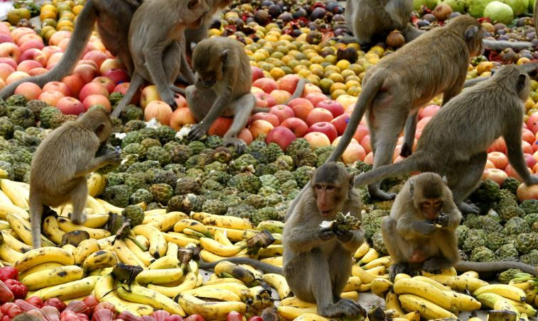 monkey-buffet-festival-top-10-most-bizarre-festivals-in-world