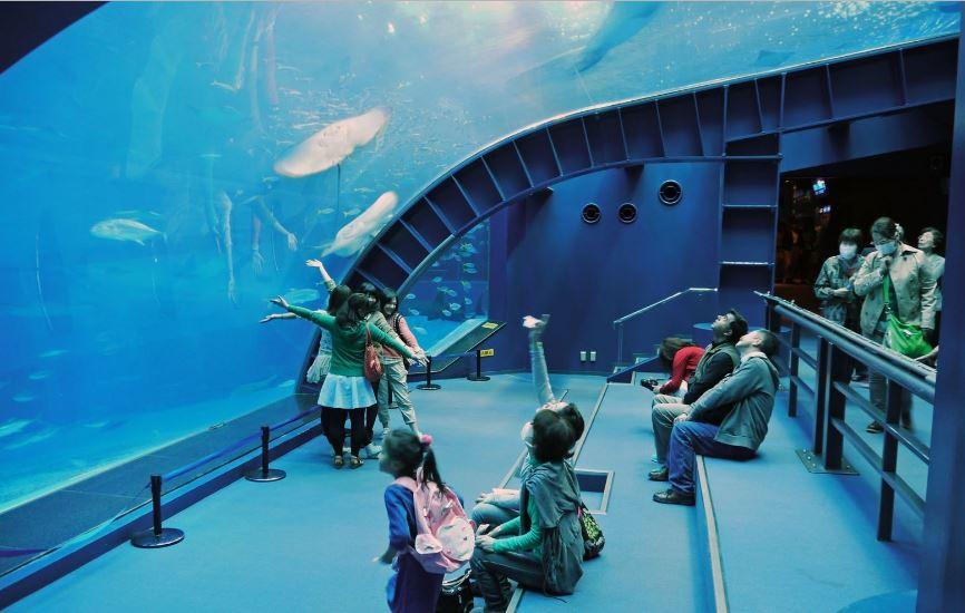 Okinawa Churaumi Aquarium, Okinawa Top Popular Amazing Aquariums In The World 2019