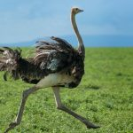 Top 10 Largest And Heaviest Living Birds in The World