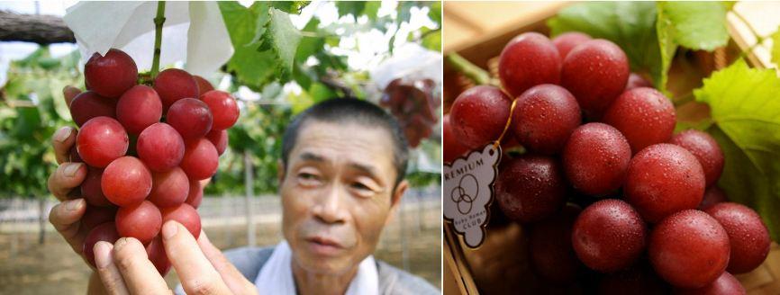 ruby-roman-grapes