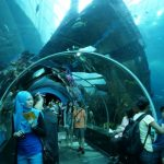 Top 10 Most Amazing Aquariums in The World