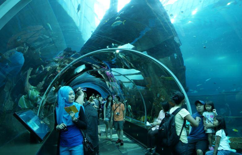 sea-aquarium-singapore-top-10-most-amazing-aquariums-in-the-world