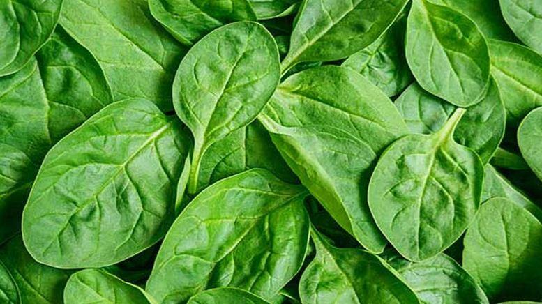 spinach, Top 10 Best Bodybuilding Foods For Women 2017