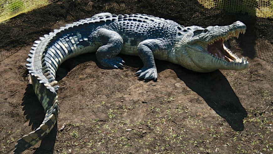 saltwater-crocodile-top-most-popular-biggest-animals-in-the-world-2018