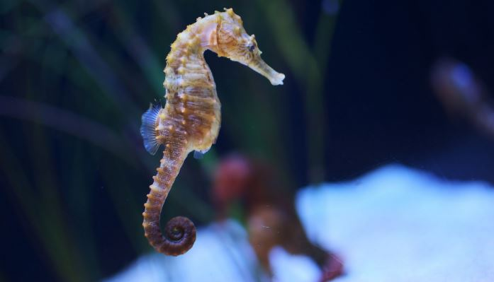 Seahorse Top 10 Slowest Animals In The World