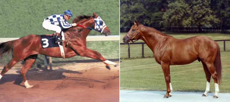 secretariat-famous-horses-and-their-famous-owners-2018-2019