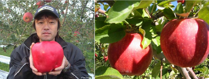 sekai ichi apples, Top 10 Most Expensive Fruits in The World 2017