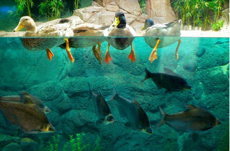 shanghai-ocean-aquarium-shanghai
