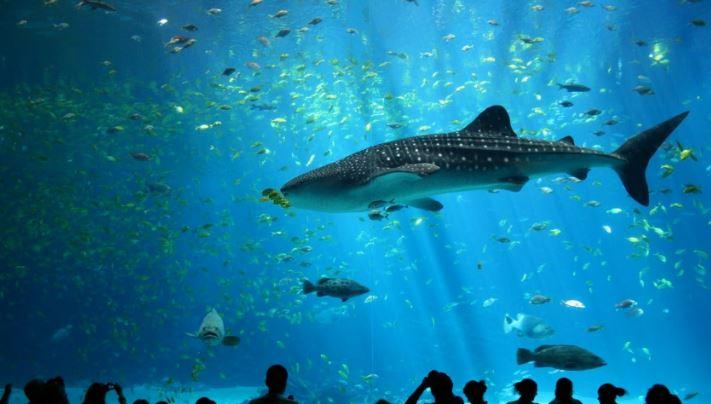turkuazoo-aquarium-istanbul