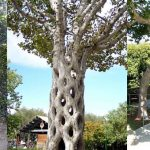 Top 10 Wonderful Trees in The World
