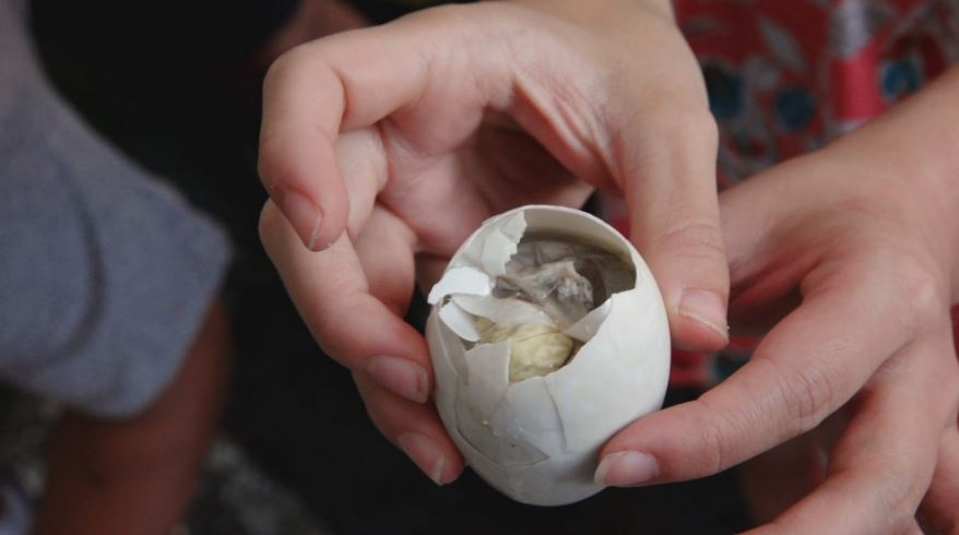 balut-top-bizarre-foods-that-people-usually-eat
