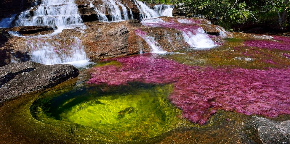 cano-cristales-colombia-top-mworlds-popular-mysterious-places-2017