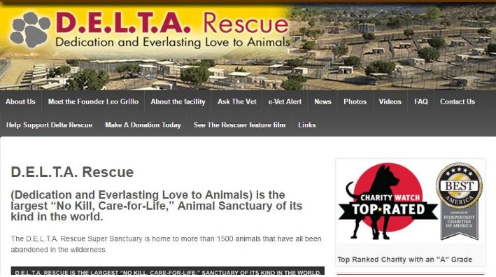 d-e-lt-a-rescue-top-best-animal-welfare-organizations-in-the-world-2017