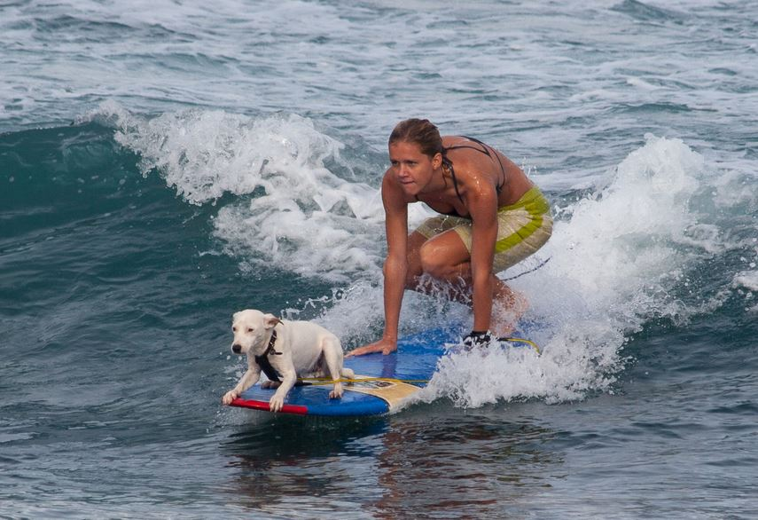 dog-surfing-top-famous-bizarre-sports-actually-exist-2018