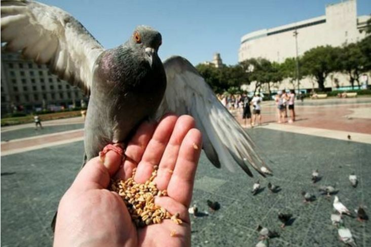 Don't Feed Pigeons Top Most Weird Laws Around Planet 2017