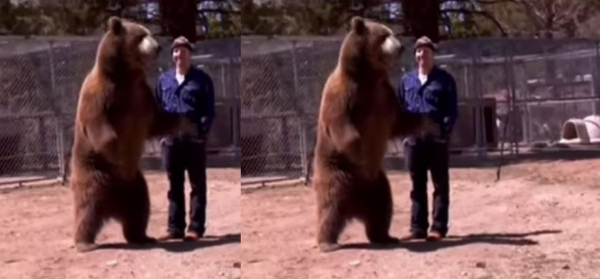 grizzly-bear-attacks-his-trainer-top-most-shocking-animal-attacks-on-human