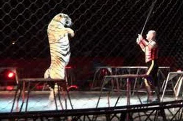 horrifying-tiger-attack-at-dinner-circus-top-most-popular-shocking-animal-attacks-on-human-2018