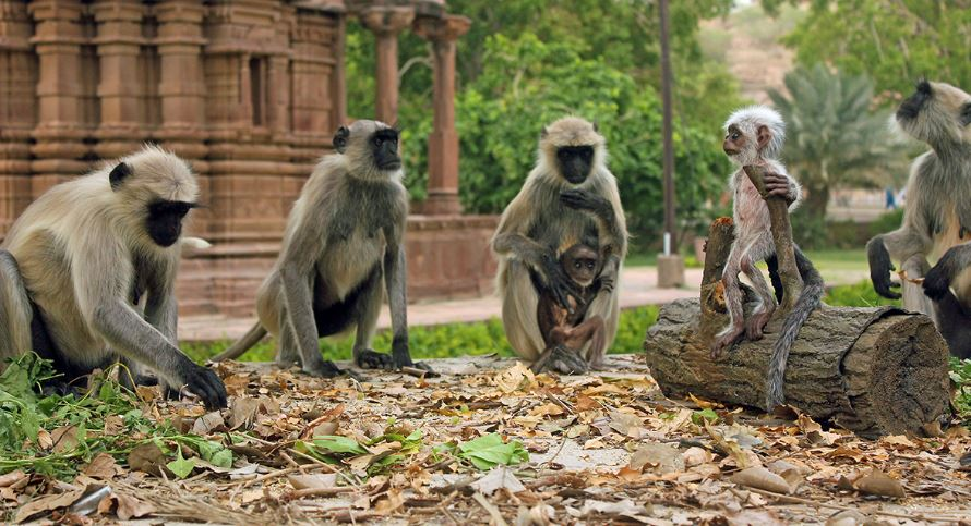 judgement-monkeys-top-most-famous-amazing-facts-about-animal-intelligence-2019