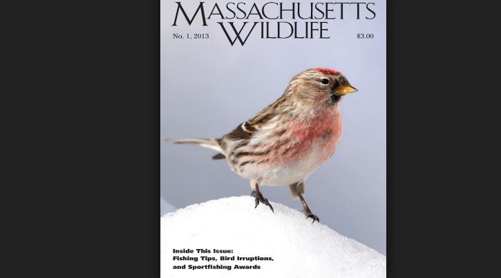 massachusetts-wildlife-top-popular-science-magazines-2019