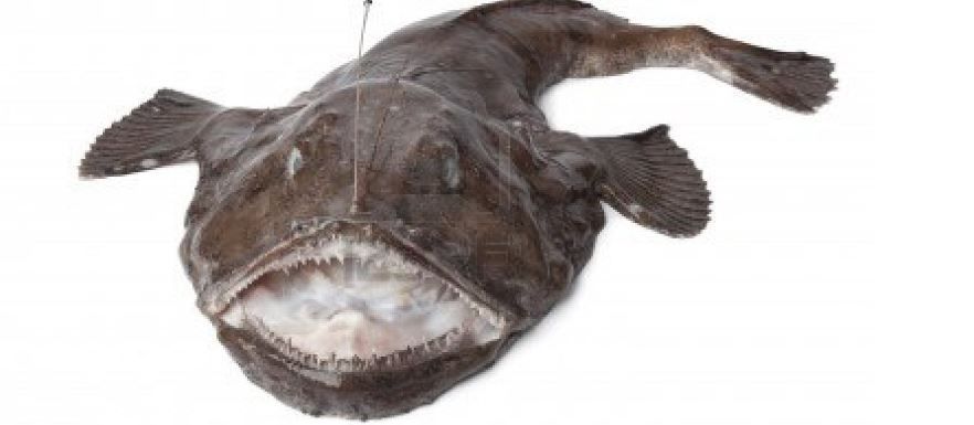 monkfish-top-famous-ugliest-animals-on-the-planet-earth-2019