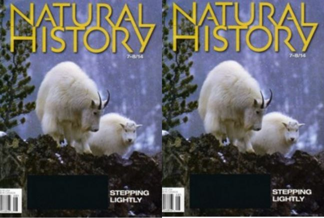 natural-history-magazine