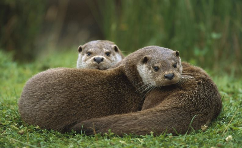 otters-top-most-popular-intelligent-animals-in-the-world2018