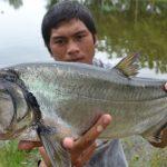 Top 10 Most Dangerous Fish Species