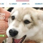 Top 10 Best Animal Welfare Organizations in the World