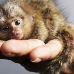Top 10 Smallest Living Animals in The World