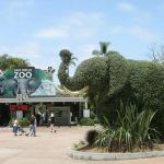 Top 10 Best Zoos in The USA