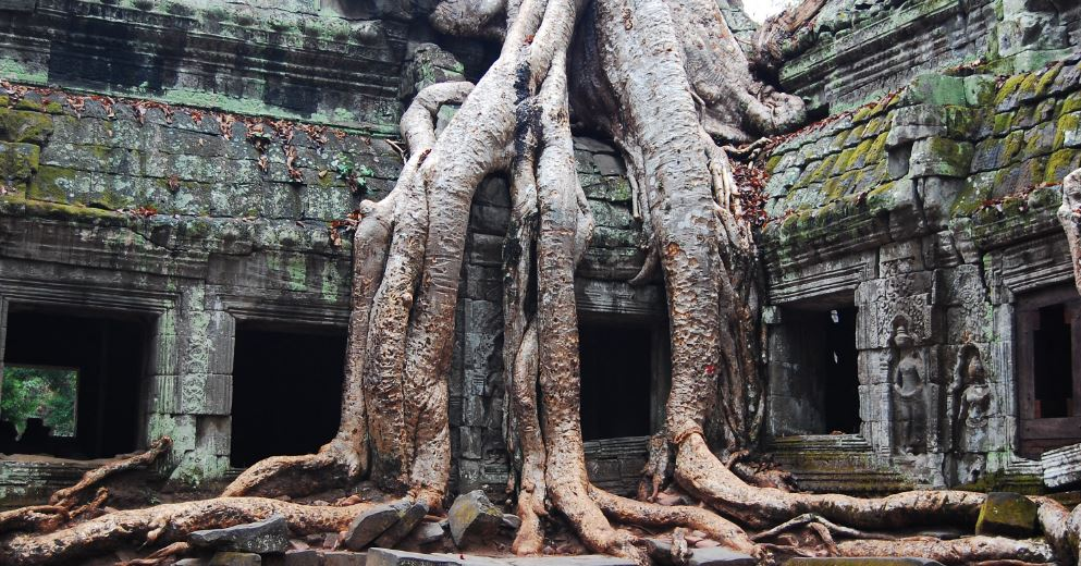 silk-cotton-trees-in-ta-prohm-top-10-wonderful-trees-in-the-world