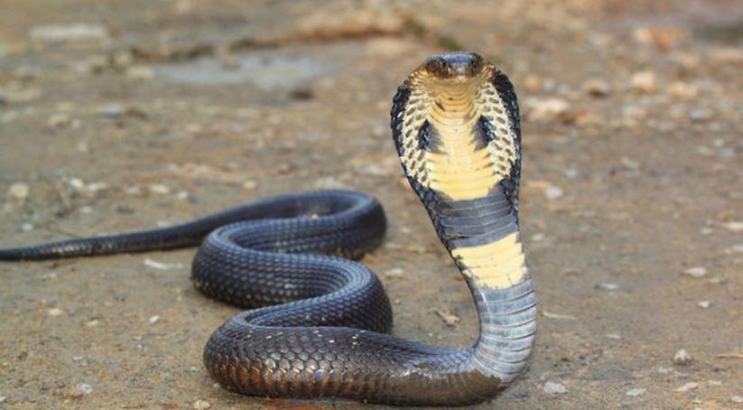 snake-top-10-deadliest-animals-around-the-world