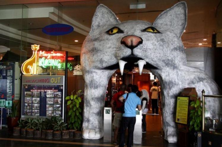 the-cat-museum